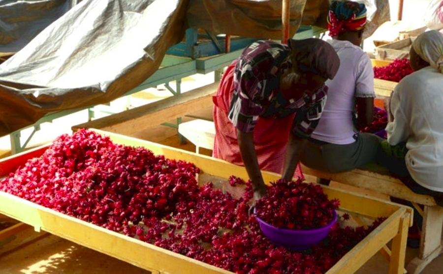 Valorizzazione delle filiere agroalimentari e sviluppo di fonti energetiche rinnovabili nella contea di Tharaka-Nithi
