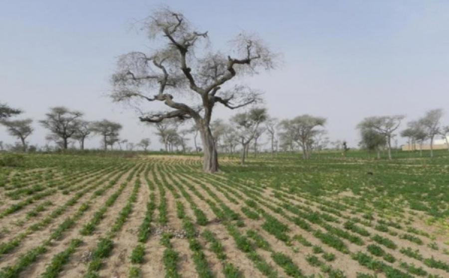Alimentare lo sviluppo. Agricoltura familiare e filiere di trasformazione nelle regioni di Thies e Louga