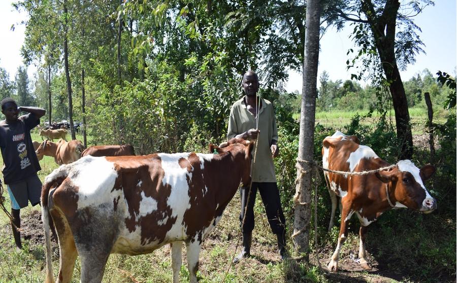 MAZIWA (latte) – Filiera lattiero-casearia nella Contea di Meru