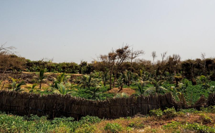 La transizione ecologica nelle città africane