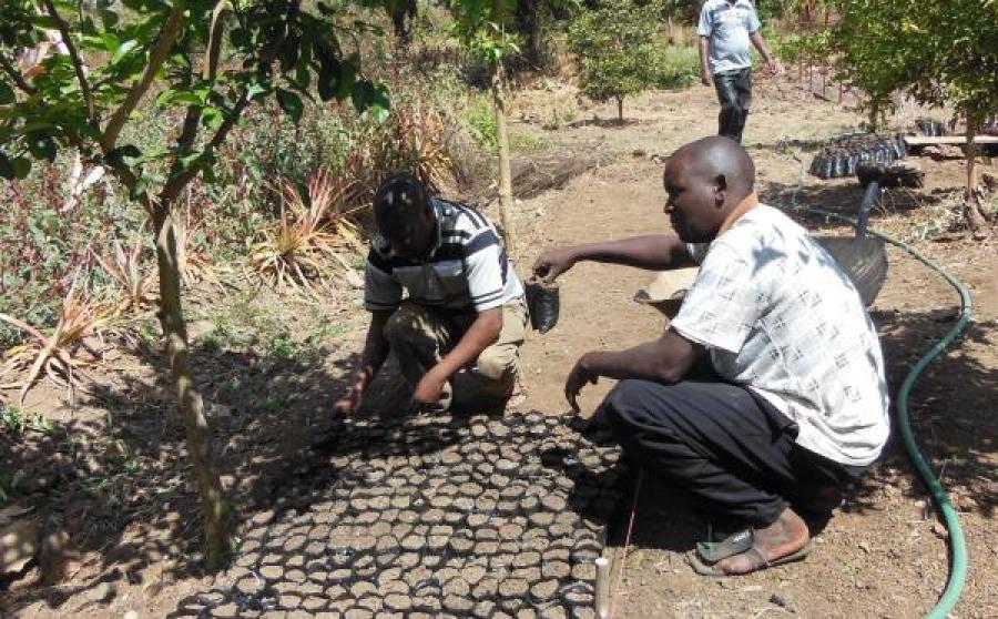 Alimentare lo sviluppo in Kenya: i primi sei mesi di progetto